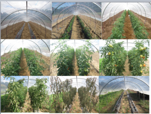 The 2015 growing season, in Durham, starting in top left.