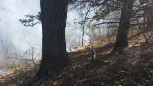 timber fire