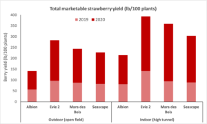 Chart showing total strawberry yield