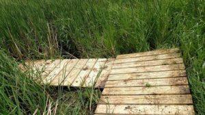 Wetland crossings.