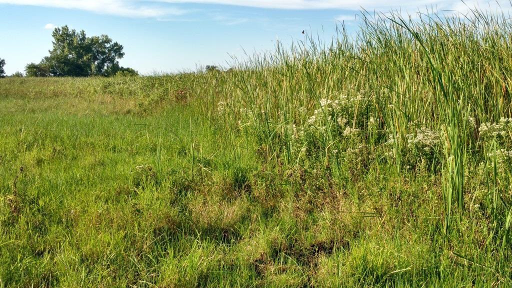 Wetland graze line