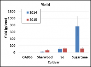 Figure 7. Yield of jujube at Cherry Creek Orchard, Pontotoc, MS. 2014 and 2015